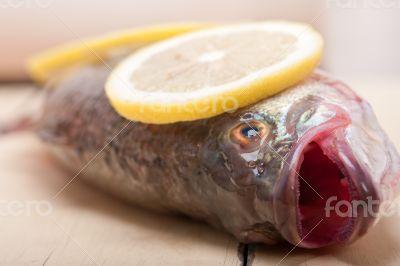 fresh whole raw fish