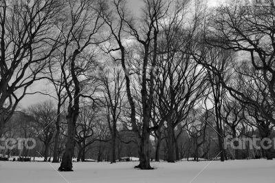 Black and white snowy central park