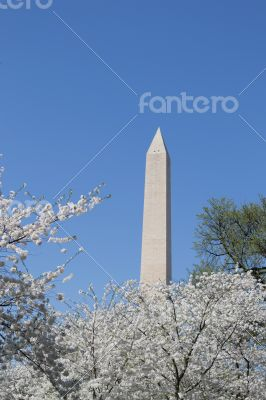 Washington meorial between flowers