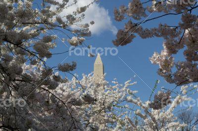 Washington Memorial between trees