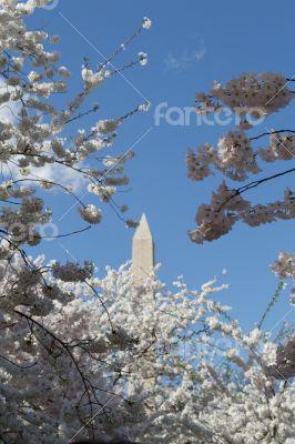 Top of the Washington Memorial