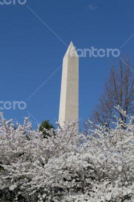 Hight of the Washington Memorial