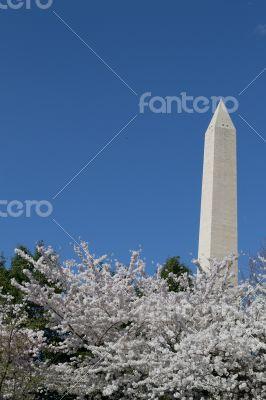 Festival and Washington Memorial