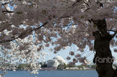 Flower arround Thomas Jefferson Memorial surrounded by flowers
