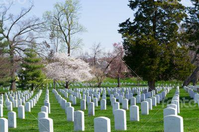 Gravestones at the Arlington Cemetery