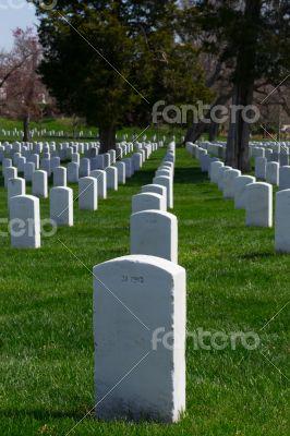 Lines of gravestones