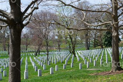 Trees at the Arlington Cemetery