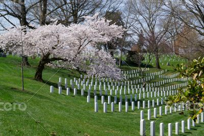 Spring coming to the Arlington Cemetery