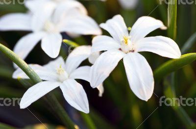 wihte flowers