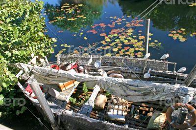 Wild Boat
