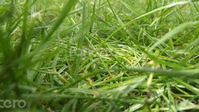 Grass shooting