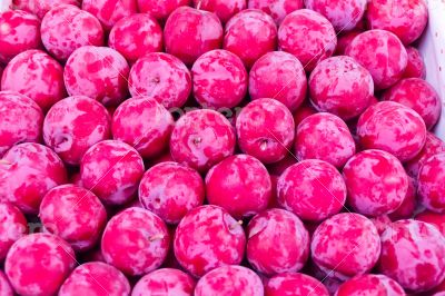 Background plum