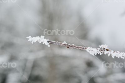 Frost twig