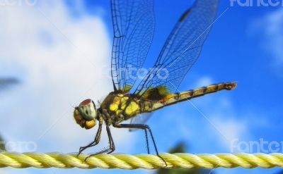 dragonfly plastic rope sky backgroundn