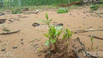 New seeds grow from the soil