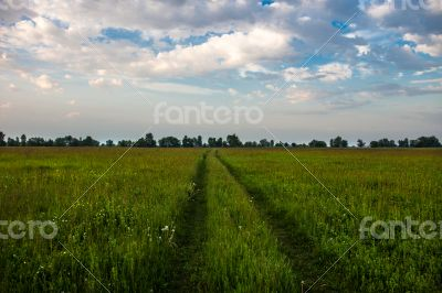 Field road against the cloudy sky