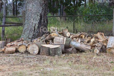 Oak wood cuttings