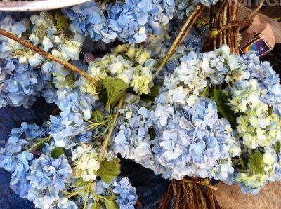 Blue flowers - Bali