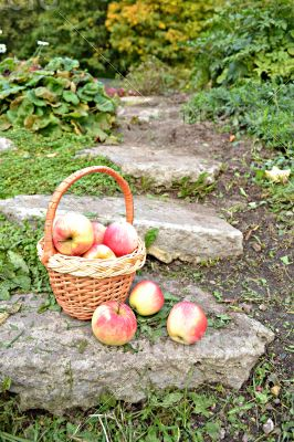 Little basket with apples