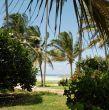 Zanzibar beach vegetation