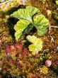 Vegetation on a bog