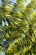 Rainforest Background 5