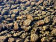 Beautiful underwater stones