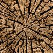 Cut of a rotten tree
