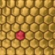 Comb honey. 3D image. Illustrations. Texture.
