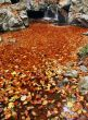 Sea of fallen leaves