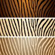zebra variation